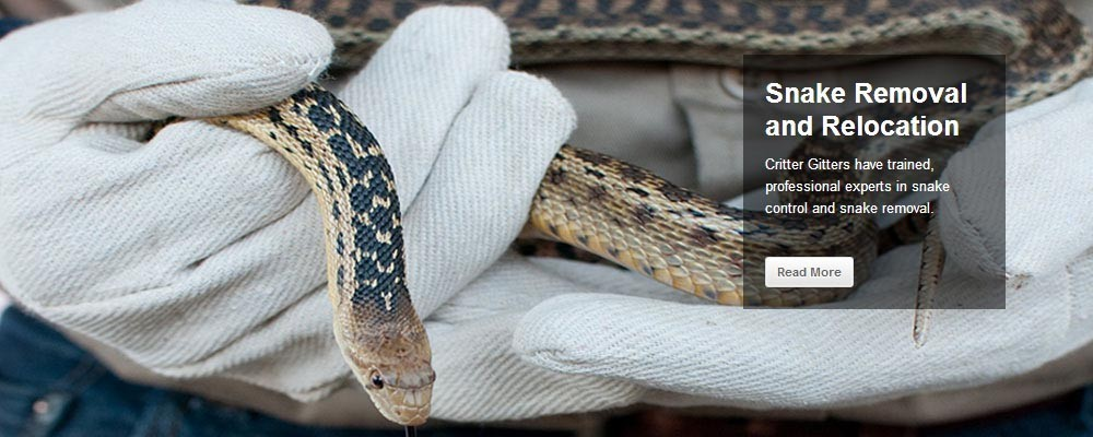 San Diego Snake Removal and Relocation