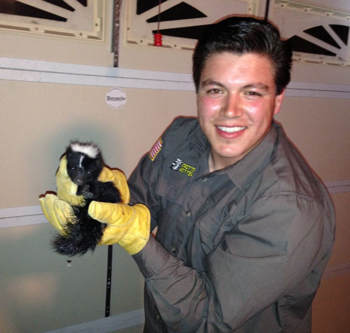 Baby San Diego Skunk