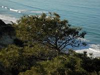 San Diego Ecological Preservation