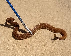 San Diego Snake Removal