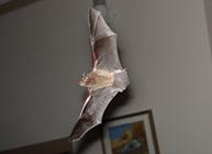 Bat Control San Diego